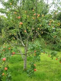 Annie Elizabeth apple
