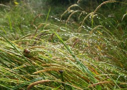Raindrops on grass