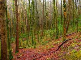 Moorehall woods