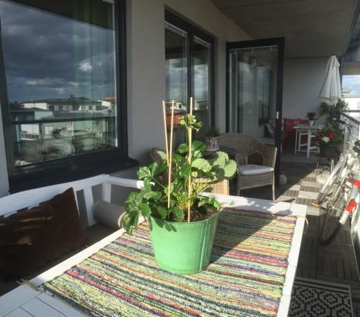 ... och jordgubbar på balkongen