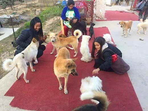 Nepal street dogs