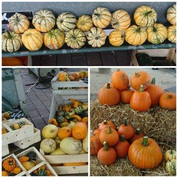かぼちゃ各種