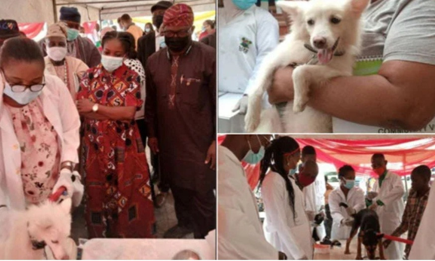 Lagos state to vaccinate 1.5 million dogs for free (photos)