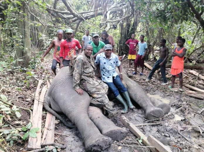 Local hunters kill 4th elephant in 2 years in Ogun state