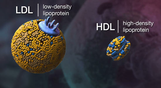 hdl-ldl-cholesterol