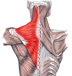 (Video) The Best Trapezius Exercise For Growth