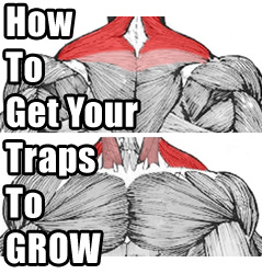 How I Got My Traps To Start Growing Again