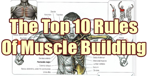 Mark's Top 10 Rules of Muscle Building