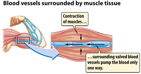 muscle-pump