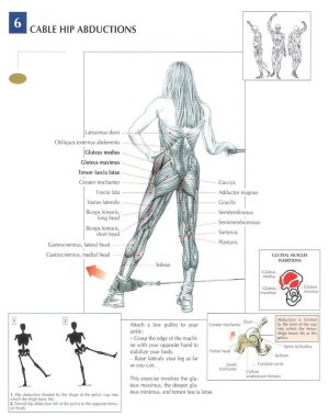The ANATOMY of Wide Grip and Close-Grip Seated Cable Row