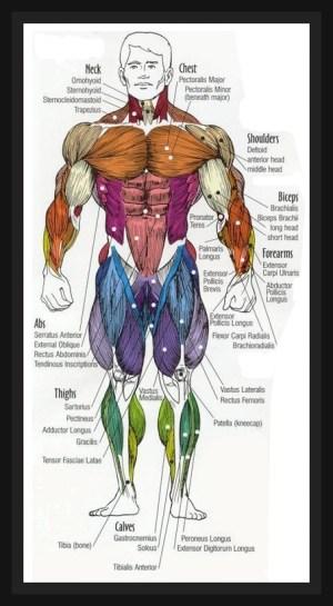 Uncategorized | muscularity