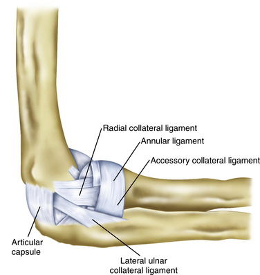 Arthroscopic and Open Radial Ulnohumeral Ligament ...