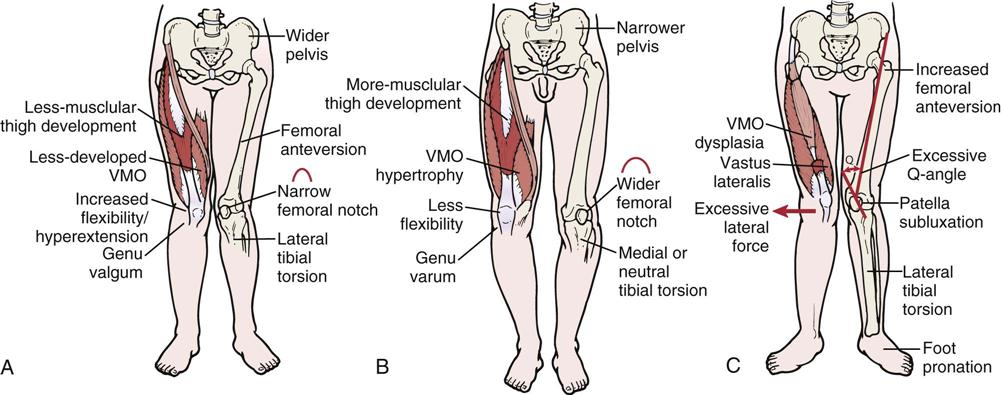 Knee Musculoskeletal Key