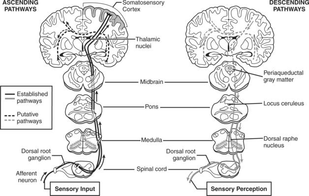 ANALGESIA, SEDATION, AND NEUROMUSCULAR BLOCKADE IN THE