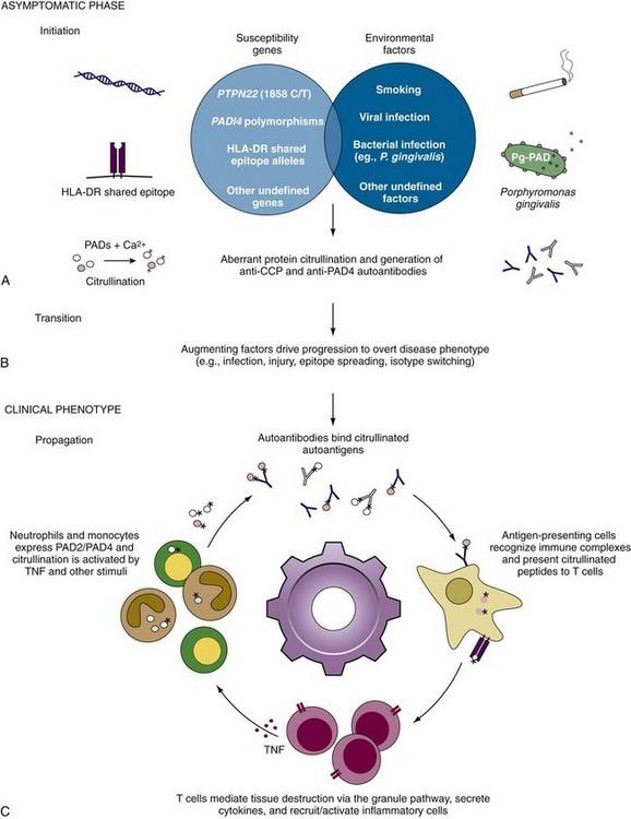 acid anti peptid ciclic citrulinat tratament comun folosind noi tehnologii