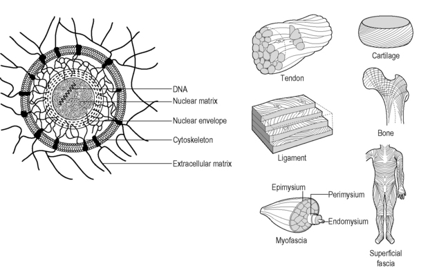 Fascia as a body-wide communication system