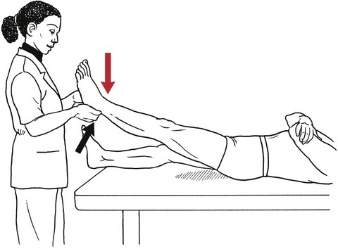Testing the Muscles of the Lower Extremity