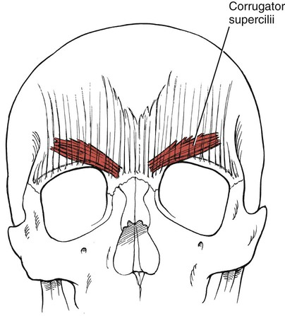 Assessment of Muscles Innervated by Cranial Nerves