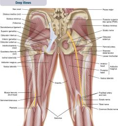 figure 10 2 posterior views of the muscles of the hip joint a superficial view on the left and an intermediate view on the right  [ 1012 x 1229 Pixel ]