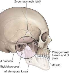 infratemporal fossa in morton da foreman k albertine kh eds the big picture gross anatomy new york ny mcgraw hill 2011 the tmj  [ 1008 x 843 Pixel ]