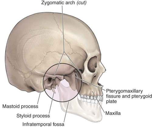 small resolution of infratemporal fossa in morton da foreman k albertine kh eds the big picture gross anatomy new york ny mcgraw hill 2011 the tmj