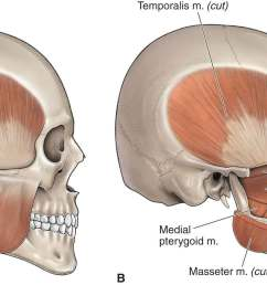 of tmj reproduced with permission from chapter 21 infratemporal fossa in morton da foreman k albertine kh eds the big picture gross anatomy  [ 1800 x 890 Pixel ]