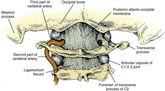 Image result for upper cervical spine ligaments and muscles