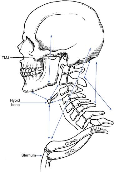 Hyoid Bone Function In Speech
