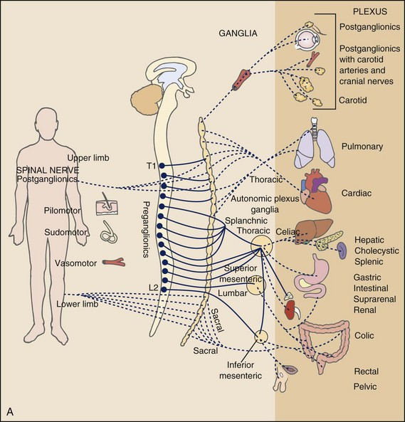 spinal cord and nerves diagram msd 6al wiring sbc pain types viscerogenic patterns | musculoskeletal key