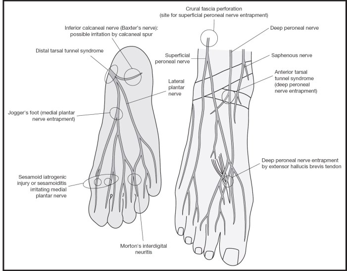 Ankle Ankle And Foot Musculoskeletal Key