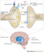 Pathogenesis of Acute Rheumatic Fever