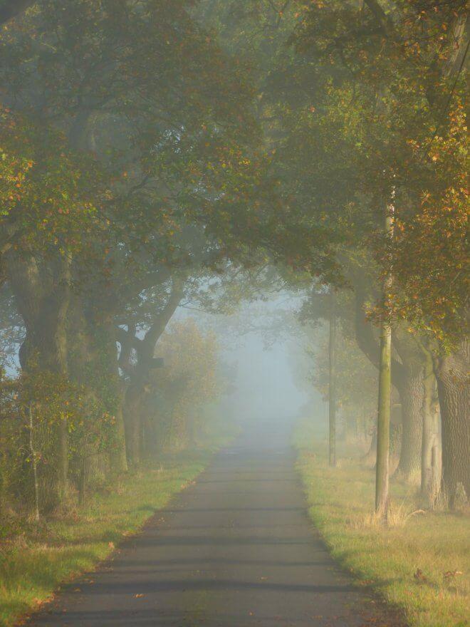 foggy-morning-019.jpg?fit=660%2C880&ssl=1