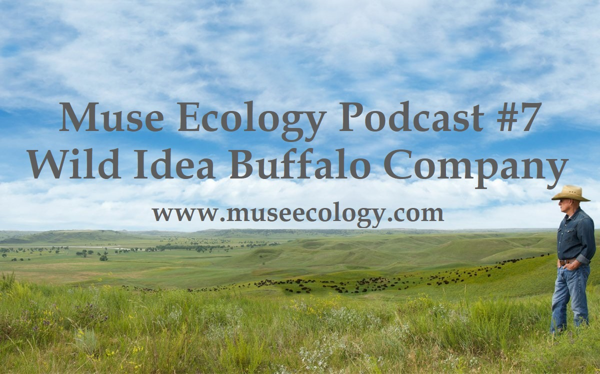 #7 Wild Idea Buffalo Company