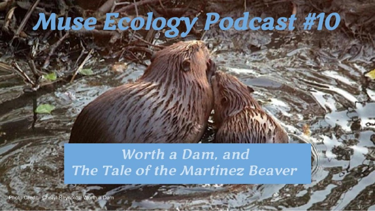 #10 Worth a Dam and the Tale of the Martinez Beaver