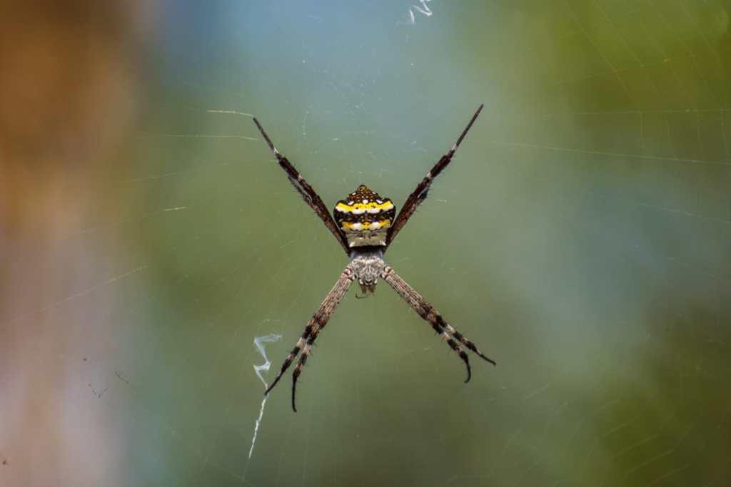 Entre arañas, cóndores y caracoles