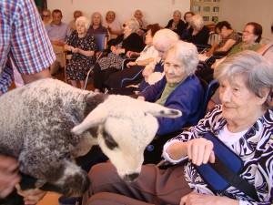 La interacción con las ovejas estimula sensorialmente a l@s participantes