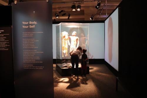 プラスティネーションを使った人体に関する展示は人気のようです