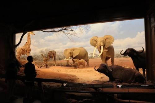 自然史博物館といえば迫力あるジオラマが欠かせません