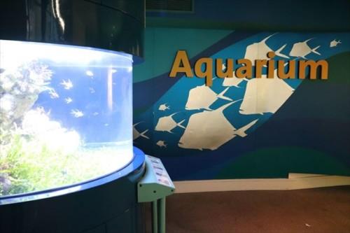 小規模ながら水族館もあります