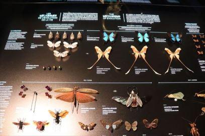 種の多様性に関する展示も充実していました