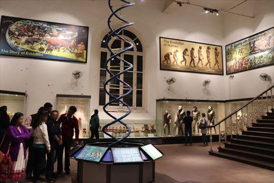 自然人類学に関する展示。DNA模型もありました
