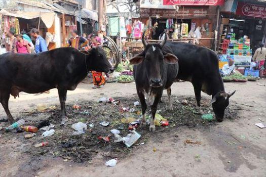 Varanasi13_R