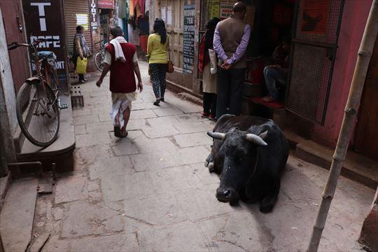 Varanasi17_R