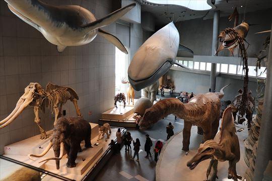 ShanghaiNaturalHistoryMuseum04_R