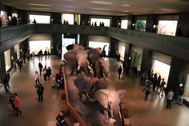 アメリカ自然史博物館の代名詞ともいえるジオラマの数々