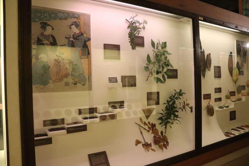 日本の植物の標本