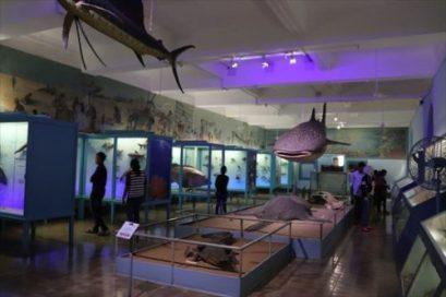 自然史の展示室