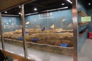 化石の発掘体験コーナー