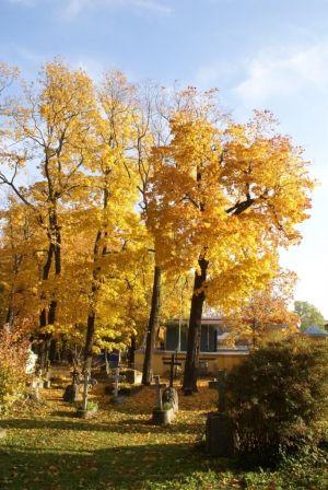 Вошли на территорию Лютеранского кладбища