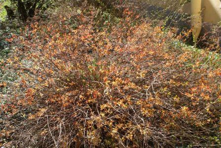 Не зеленый лист весной